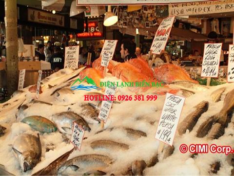 Lắp đặt kho lạnh bảo quản cá tra