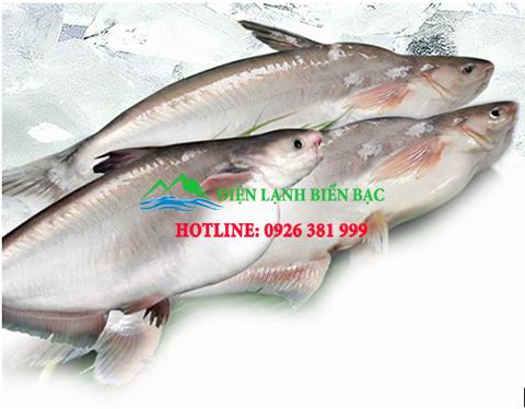 kho lạnh bảo quản cá tra