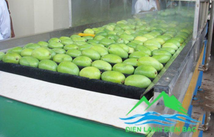 Làm kho lạnh bảo quản hoa quả, lắp đặt kho lạnh bảo quản trái cây, thi công kho lạnh bảo quản